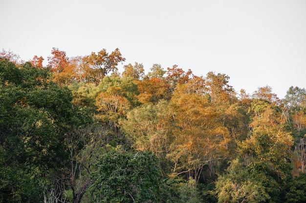 Красивый пейзаж красивой осенней лесной горы с разноцветными листьями в природе