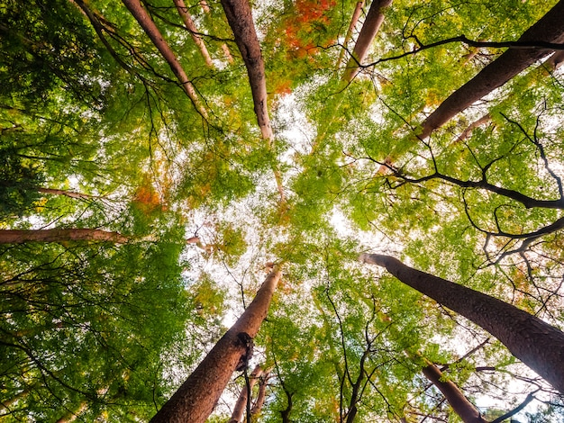 Красивый пейзаж большого дерева в лесу с низким видом ангела