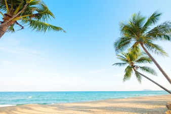 Beautiful landscape of coconut palm tree on tropical beach  in summer.