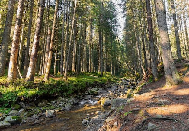 Красивый пейзаж быстрого горного ручья с каменистым дном в лесу.