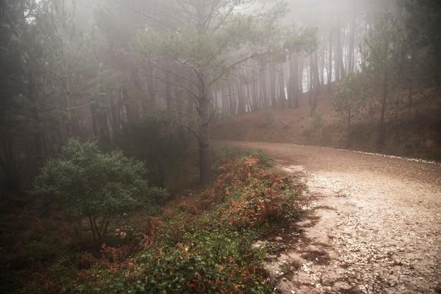 Красивый пейзаж лесной дороги