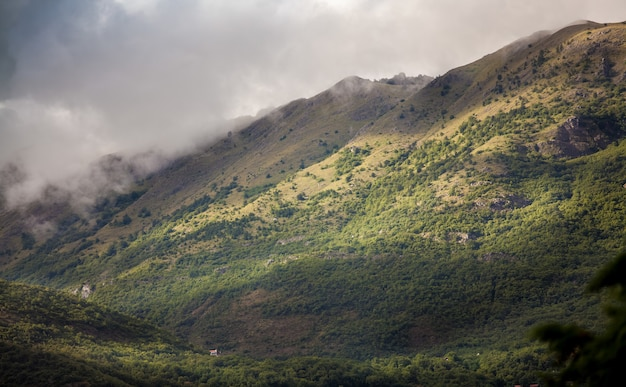 雲に覆われた草が生い茂る高山の美しい風景
