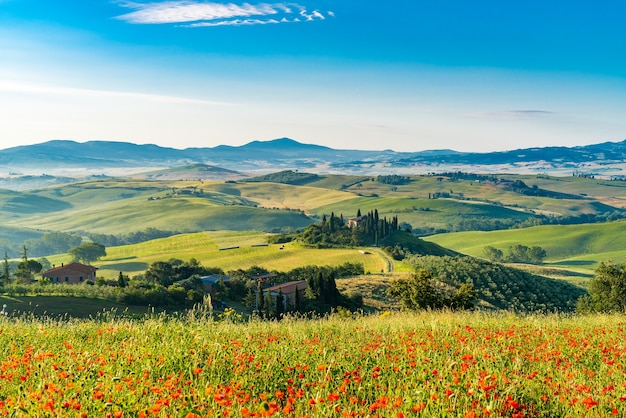 Красивый пейзаж холмистой тосканы в летнее солнечное утро с известным фермерским домом, виноградниками и полем красных цветов мака в вальдорча, италия