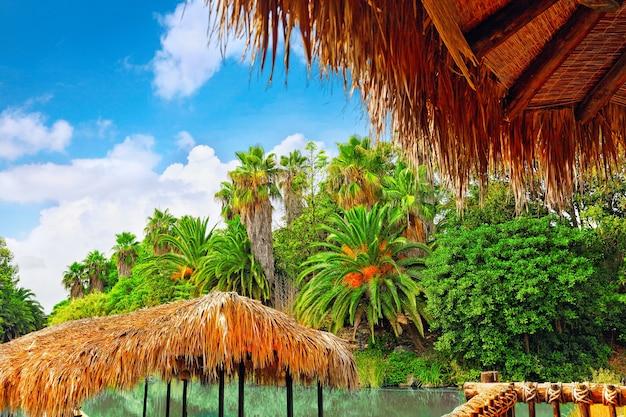 Красивый пейзаж влажных тропических джунглей.