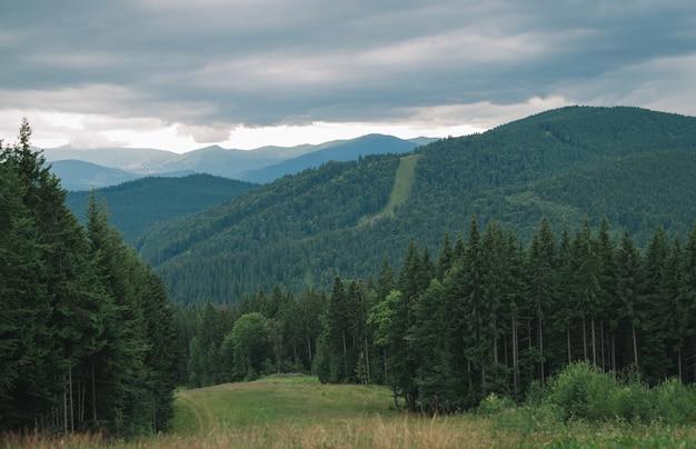 曇りの山と針葉樹林の美しい風景