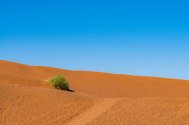 Красивый ландшафт песка оранжевой песчанной дюны оранжевого на пустыне namib в национальном парке sossusvlei namib-naukluft в намибии.