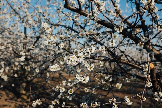 背景に青い空と春に咲く木の美しい風景。