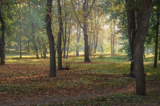緑の森に輝く太陽の美しい風景。夜明けの森。