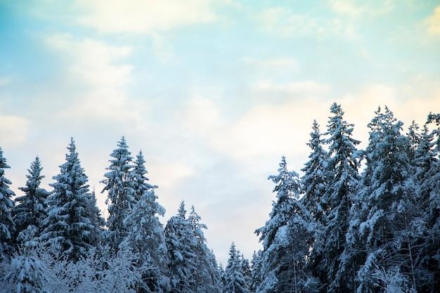 冬の森の美しい風景。