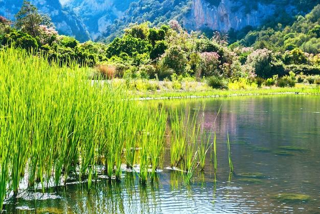 花、緑の草、背景に山々と湖の海岸の美しい風景