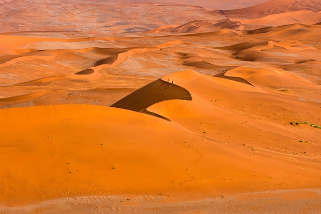 Beautiful landscape of orange sand dune orange sand at namib desert in namib-naukluft national park sossusvlei in namibia.