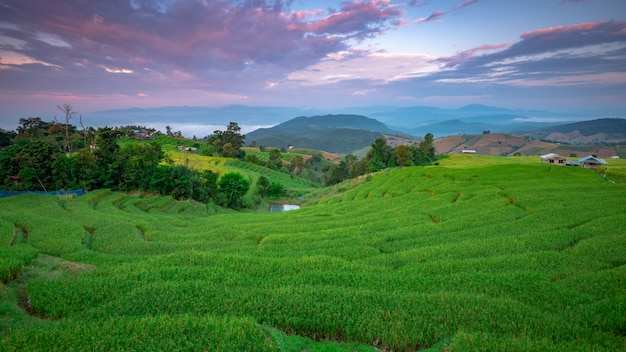Beautiful landscape. paddy fields at pa pong pieng village, mae chaem, chiang mai, thailand.