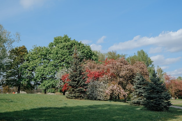 Beautiful landscape of a park in sprint