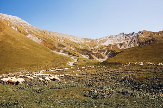 Красивая пейзажная фотография грузинских гор