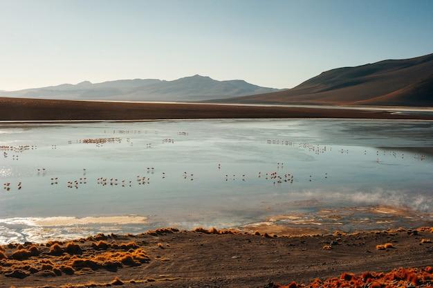 Beautiful landscape in the reserva nacional los flamencos.