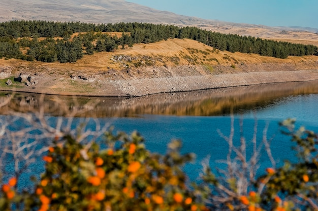 Beautiful landscape of reservoir with lots of spruces, colorful flowers and reflective water