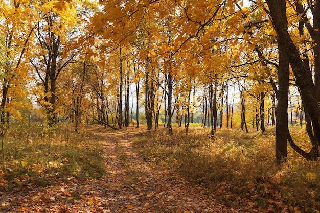 Красивый пейзаж дорога в осеннем лесу