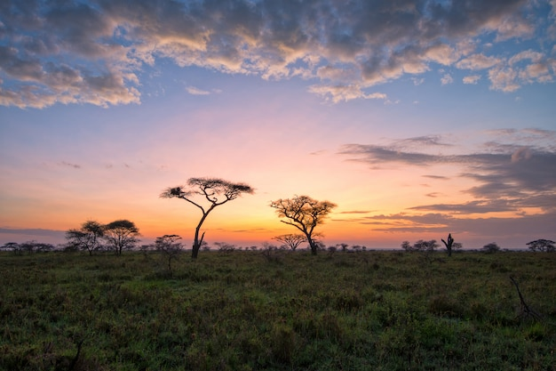 Beautiful landscape in savanna