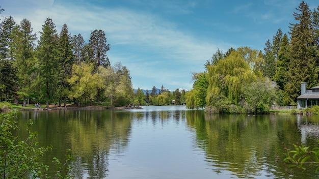 평화로운 하늘 아래 나무로 둘러싸인 녹색 호수의 아름다운 풍경 샷
