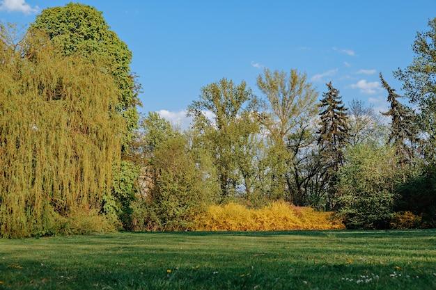 Beautiful landscape spring park