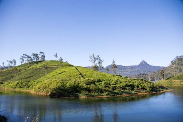 Beautiful landscape of sri lanka. river, mountains and tea plantations