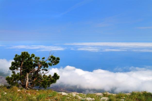 Красивый пейзаж, дерево растет на вершине скалистой горы, лесная долина и голубое небо с белыми облаками