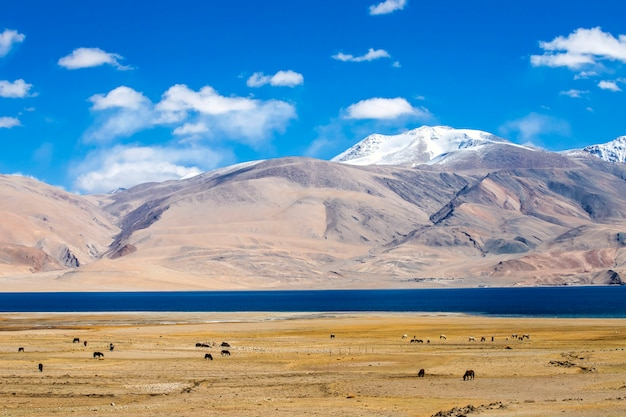 Beautiful landscape, tso moriri lake on clear sunny day with mountain background