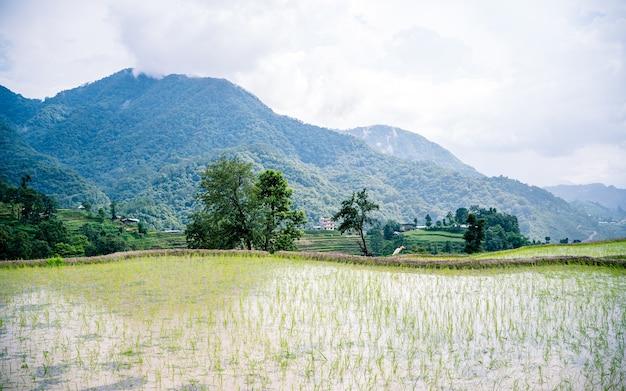네팔 카트만두 논밭의 아름다운 풍경