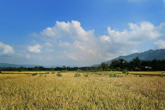 棚田の美しい景観