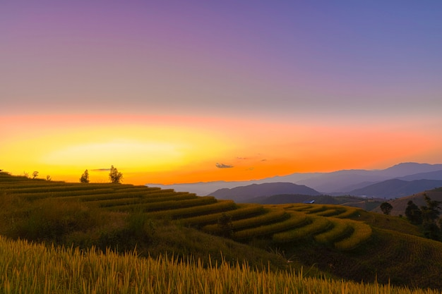 Beautiful landscape view of rice terraces in chiang mai , thailand.