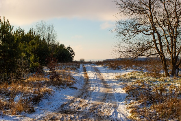 Beautiful landscape in winter without snow