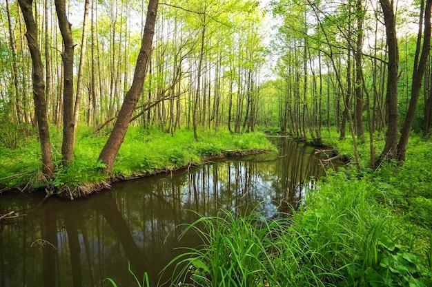 森の中の川のある美しい風景。川の倒れた木の枝。自然の構成。