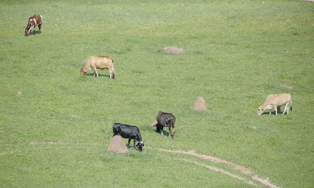 Красивый пейзаж со скотом и туканами