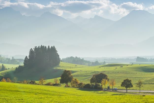 초원에 pasturing 암소와 아름 다운 풍경