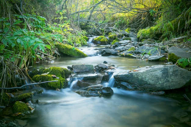 Beautiful landscape with forest creek  waterfall