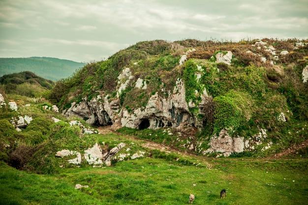 녹색으로 덮인 바위, 동굴, 개가있는 아름다운 풍경