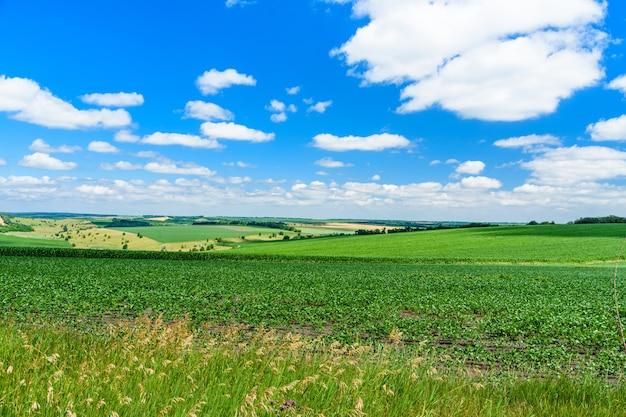 Beautiful landscape with green fields under blue sky