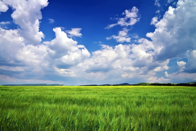 Beautiful landscape with green meadow and cloudy sky. composition of nature.