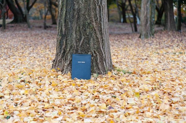 Beautiful landscape with holy bible outdoors in autumn with fallen yellow leaves.