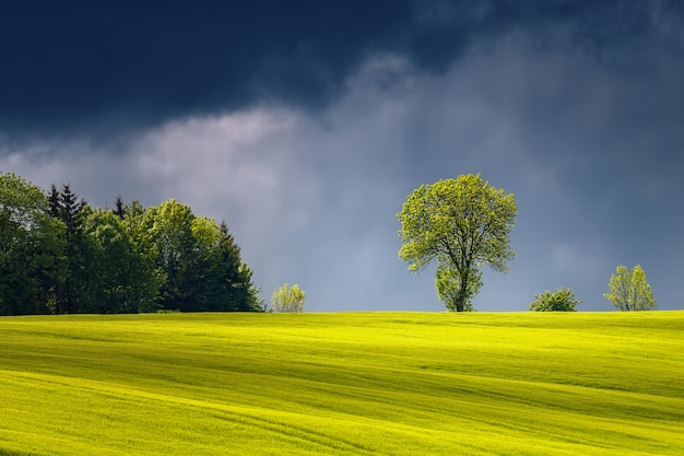 Beautiful landscape with illuminated sunlight tree before the storm