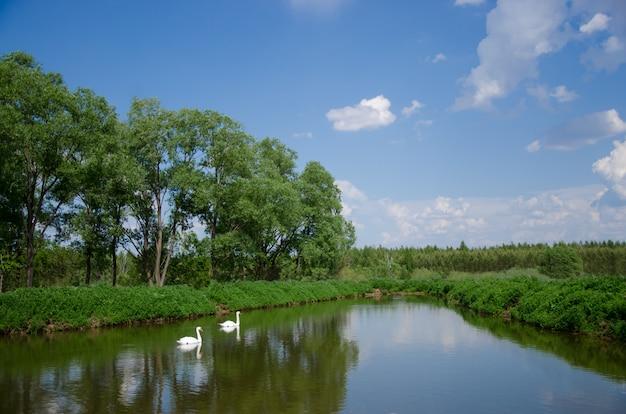 Красивый пейзаж с озером и лебедями