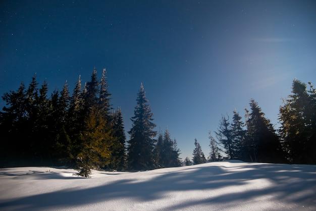 雄大な背の高いモミの木と雪のある美しい風景