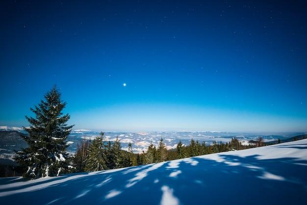 晴れた凍るような冬の日に青い空を背景に白い雪の吹きだまりの中で成長する雄大な背の高いモミの木のある美しい風景。トレッキングと環境にやさしい休暇のコンセプト。