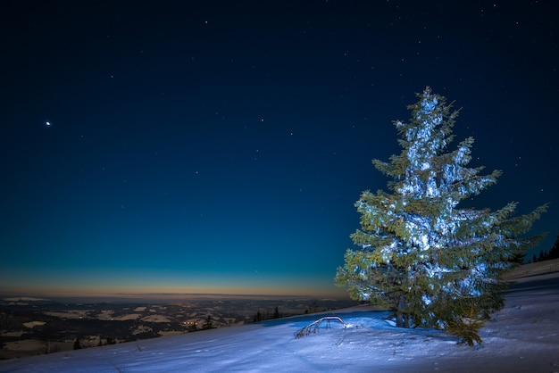 雄大な背の高いモミの木のある美しい風景