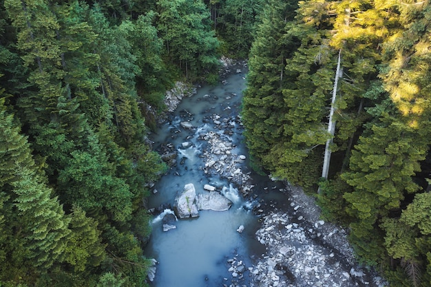 緑の森の山の川と美しい風景