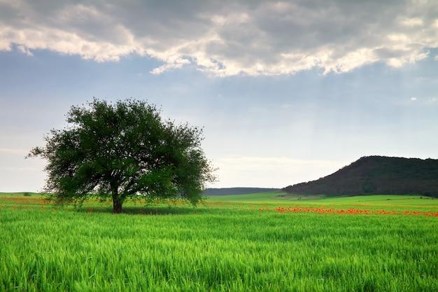 木と山のある美しい風景。