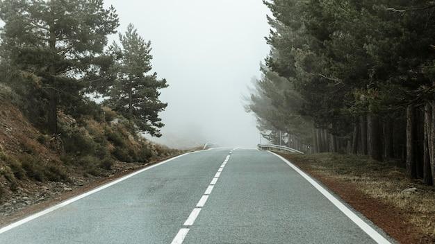 나무와 도로와 아름다운 풍경