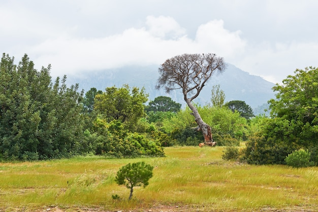 山の芝生の上の木と美しい風景。