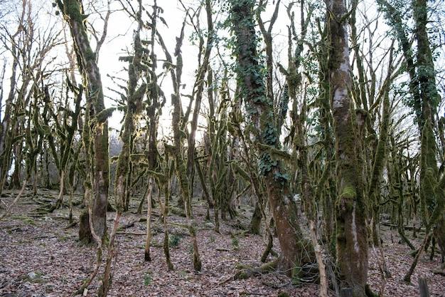 Bellissimo paesaggio con alberi