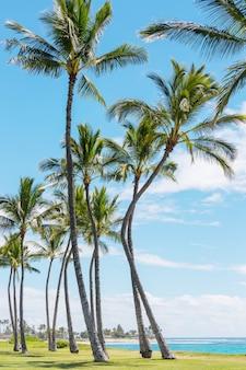 Красивые пейзажи на острове оаху, гавайи